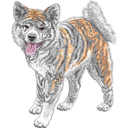 spitz: Akita Inu Japanese Dog standing and smiling