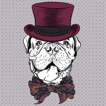 cravat: Dog French Mastiff or Dogue de Bordeaux breed in a top hat and cravat bow Illustration