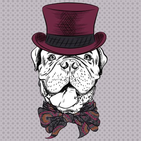 Hond Franse Mastiff of Bordeauxdog ras in een hoge hoed en das boog Stock Illustratie