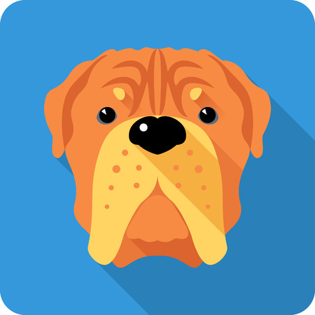 bordeaux: Vector serious dog French Mastiff or Dogue de Bordeaux  icon flat design