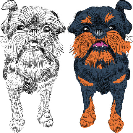 stocky: closeup portrait of the toy dog Brussels Griffon breed Illustration