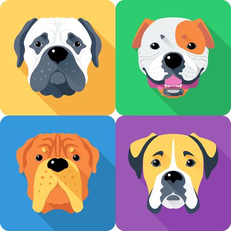 bullmastiff: Vector dog Bullmastiff, French Mastiff, Boxer and American Bulldog breed face icon flat design Illustration