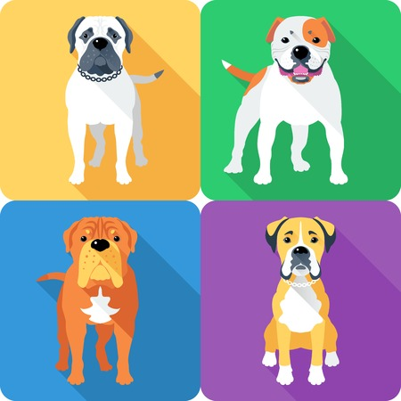 bullmastiff: Vector dog Bullmastiff, French Mastiff, Boxer and American Bulldog breed face icon flat design Illustration