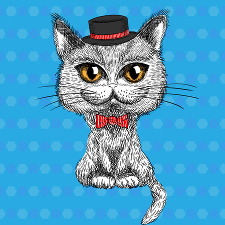 bowtie: sketch closeup portrait of funny British cat hipster in the  black hat and red bowtie