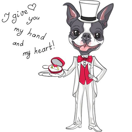 boston terrier: Elegant fashionable bridegroom dog Boston Terrier in white wedding tuxedo with engagement ring