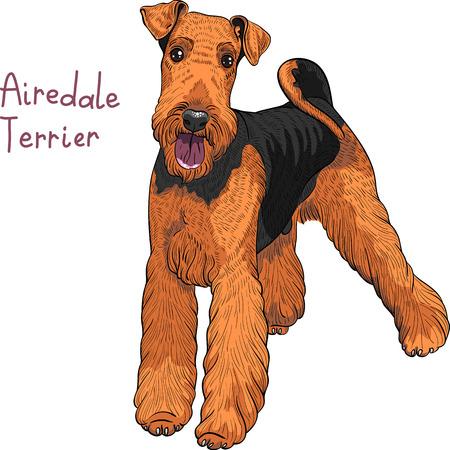 boceto a color del perro de Airedale Terrier raza
