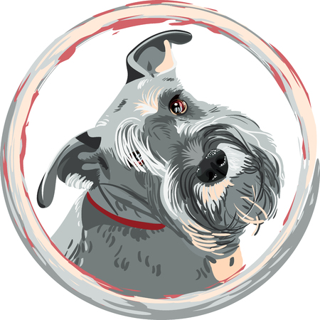 Dog breed bearded Miniature Schnauzer color of pepper and salt in the round frame. T-shirt Graphics. Dog print. 版權商用圖片 - 57157473