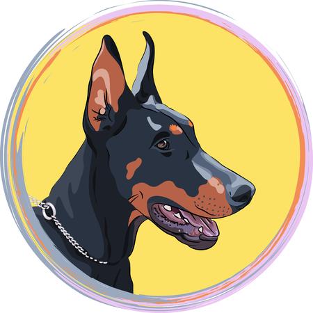 pinscher: Close-up portrait of serious dog. Dog Doberman Pinscher breed in the round frame. T-shirt Graphics. Dog print. Illustration