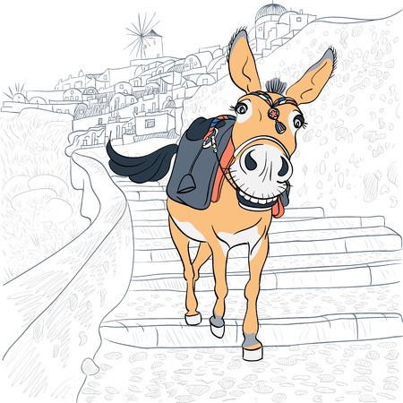 santorini greece: Donkey in the village of Oia, Santorini, Greece