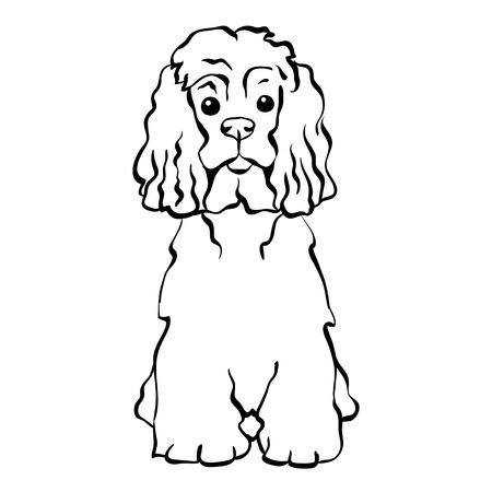 手描きのベクトルを座っている面白い犬アメリカン ・ コッカー ・ スパニエル種をスケッチします。  イラスト・ベクター素材