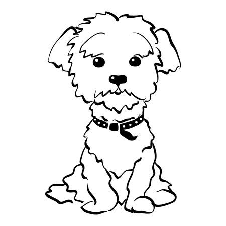 Bosquejo perro divertido de la raza maltés dibujo vectorial de estar mano