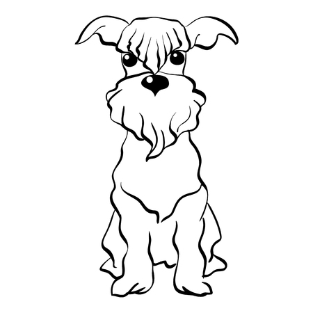 miniature breed: Sketch Funny dog Miniature Schnauzer breed sitting breed hand drawing vector
