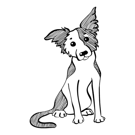 collie: Sketch Funny dog Border Collie breed sitting hand drawing vector