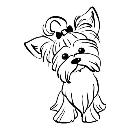 yorkshire terrier: Sketch Funny dog Yorkshire terrier breed sitting hand drawing vector
