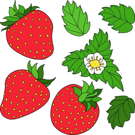 jams: Set of three red ripe strawberry, green leaves and white flower. Vector illustration. Illustration
