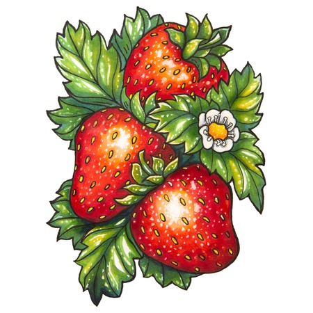 jams: Three ripe strawberry and flower on a background of green leaves, is drawn marker. Stock Photo