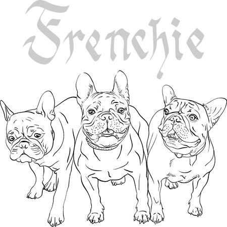 frances: Vector de tres perros domésticos raza Bulldog Francés Vectores