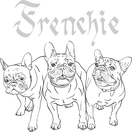 french: Vector three domestic dogs French Bulldog breed Illustration