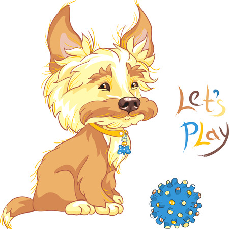 shaggy: Funny cute redhead shaggy puppy wants to play