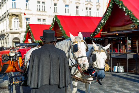 coachman: Coachman in a black hat and coat and white horses hitched to horse carriage waiting for tourists on Christmas Old Town Square of Prague, Czech Republic. Stock Photo