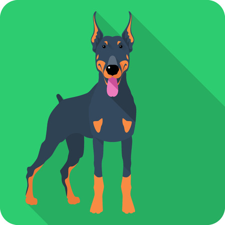 Vector serious dog Doberman Pinscher body icon flat design