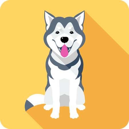 alaskan malamute: Vector dog Alaskan Malamute breed sitting icon flat design Illustration