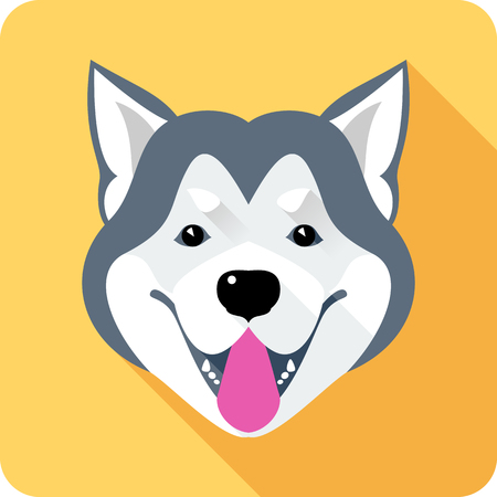 alaskan malamute: Vector dog Alaskan Malamute head breed icon flat design