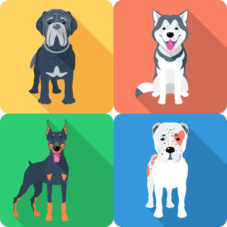 Vector set of dogs Central Asian Shepherd, Doberman, Alaskan Malamute and Mastino breed icon flat design Illustration