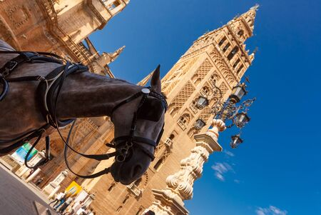 Horse carriage waiting for tourists near Giralda, bell tower of the Seville Cathedral, in the sunny summer day, Seville, Andalusia, Spain. Stock Photo