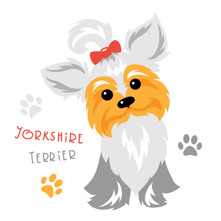 yorkshire terrier: Cute funny dog silver blue and pale cream Yorkshire terrier breed sitting Illustration