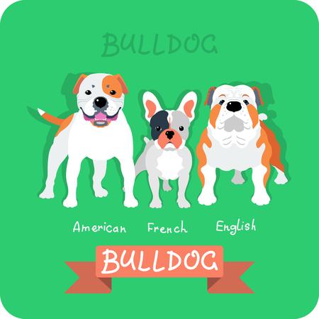 Set dog icon flat design. American, french and english bulldogs Illustration