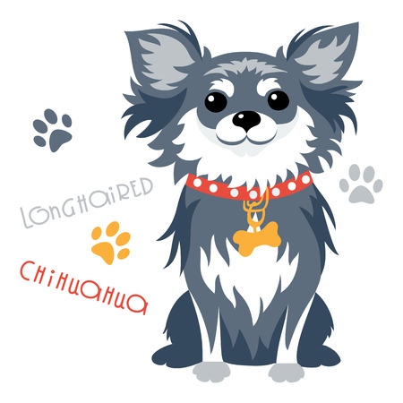 longhaired: Cute funny dog black longhaired apple head Chihuahua breed sitting vector