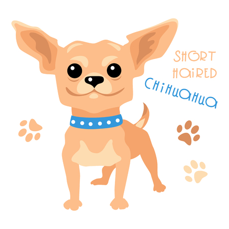 pedigreed: Cute funny dog tan shorthaired deer head Chihuahua breed vector