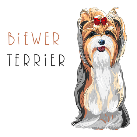 Cute funny dog Biewer Yorkshire Terrier breed sitting vector Illustration