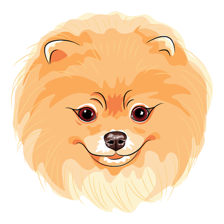 Vector cute dog German Toy Pomeranian breed smiling