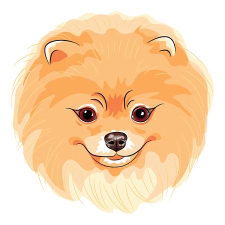 Vector schattige hond Duitse Toy Pomeranian ras lachend Stockfoto