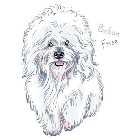 longhaired: white cute dog Bichon Frise breed on blue background Illustration