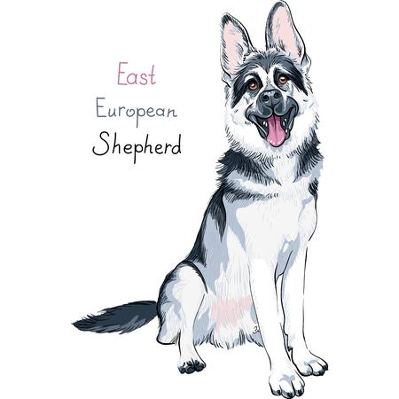 강아지 동부 유럽 양치기 앉아서 그의 혀 놀고 품종의 초상화 일러스트