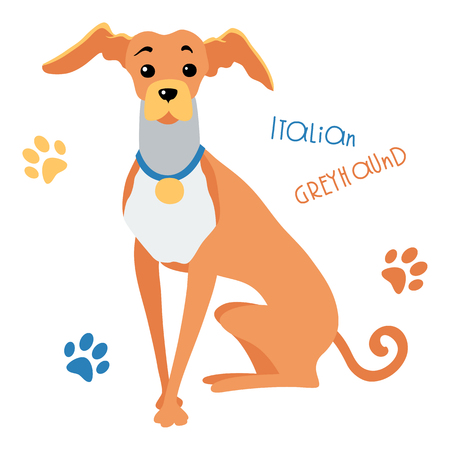 greyhound: Vector color Funny dog Italian Greyhound breed sitting hand drawing vector