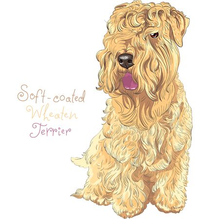Cute funny dog Soft-coated Wheaten Terrier breed sitting vector