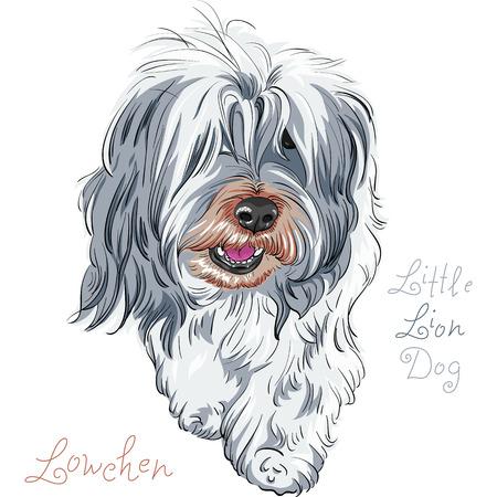 Dog cute breed Lowchen or Little Lion Dog Vettoriali