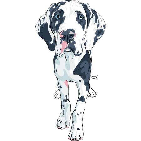 Vector spotted dog Harlequin Great Dane Puppy Illustration