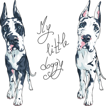 Vector spotted dog Harlequin Great Dane Puppy with cropped ears Illustration