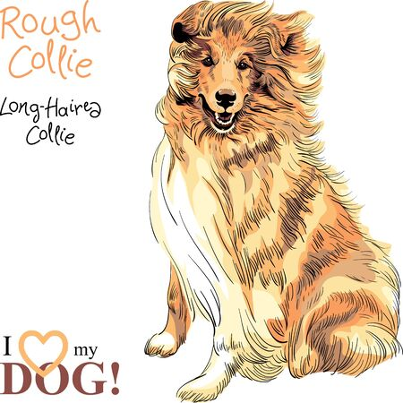 Vector sketch of Sweet dog Sable and white Rough Collie breed sitting hand drawing vector Illustration