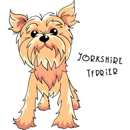 Vector Yorkshire terrier dog Çizim
