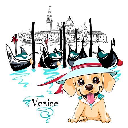 Vector cute little white puppy Labrador Retriever dog in Venice, Italia.