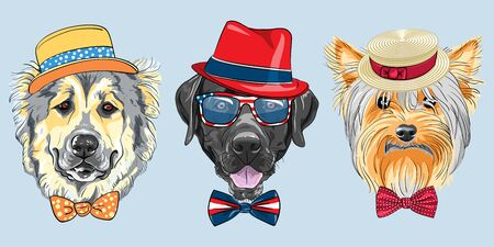 Set of hipster dogs in hats and bow ties. Caucasian Shepherd Dog, black Labrador Retriever in glasses and Yorkshire Terrier in Straw boater.