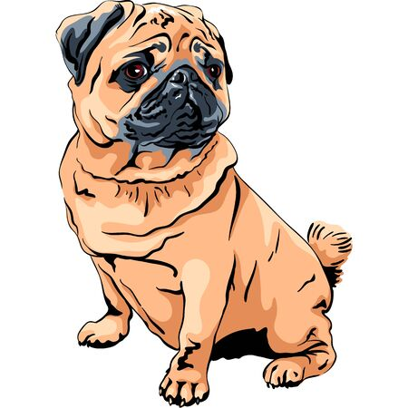 Vector cute dog pug breed apricot fawn color