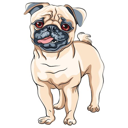 Vector cute dog pug breed fawn color Illustration