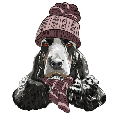 Vector hipster black dog English Cocker Spaniel breed in a warm winter knitted brown hat and scarf Illustration